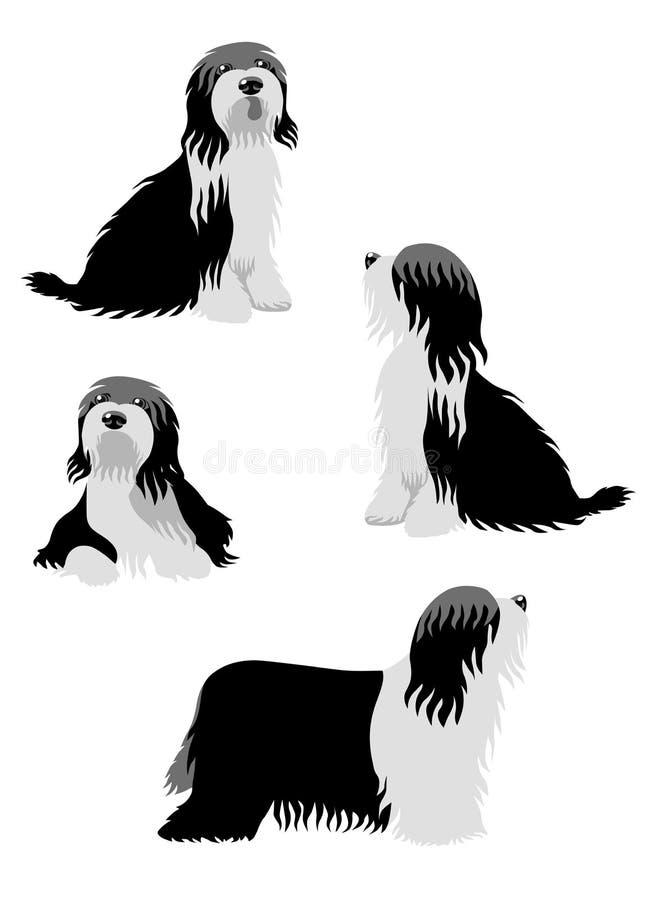 Bearded Collie or Tibetan Terrier stock illustration