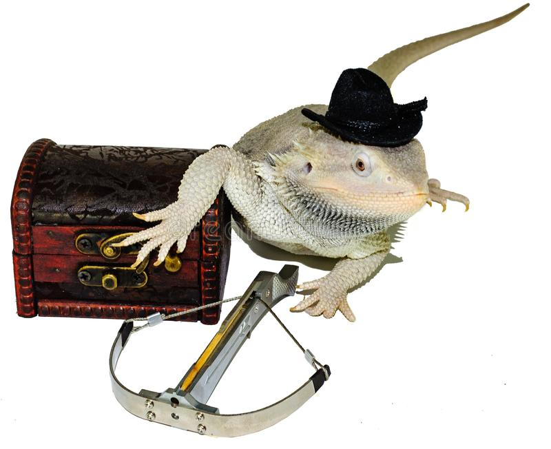 Cowboy Zero Dragon Locked and Loaded. Bearded Dragon in hat wielding a crossbow guarding treasure in dapper hat stock photography