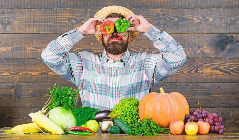 Bearded farmer hold peppers in front of face. Pepper harvest concept. Farmer having fun wooden background. Man hold. Pepper harvest as funny grimace. Chilli and royalty free stock image