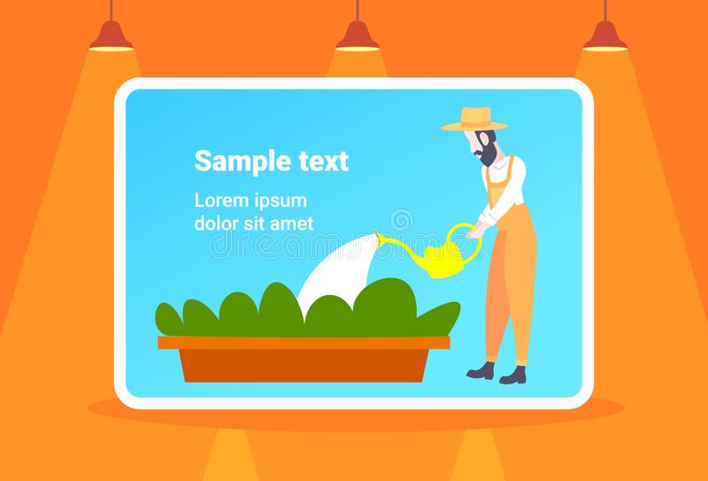 Bearded gardener watering young plants in greenhouse organic farming concept male cartoon character full length flat. Horizontal copy space vector illustration stock illustration