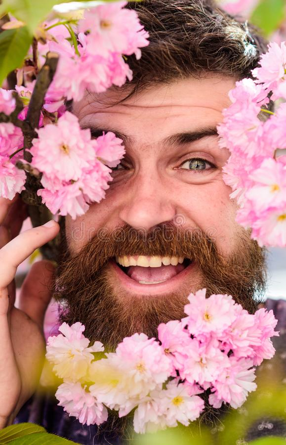 Bearded male face peeking out of bloom of sakura. Man with beard and mustache on happy face near tender pink flowers. Close up. Hipster with sakura blossom in stock photos