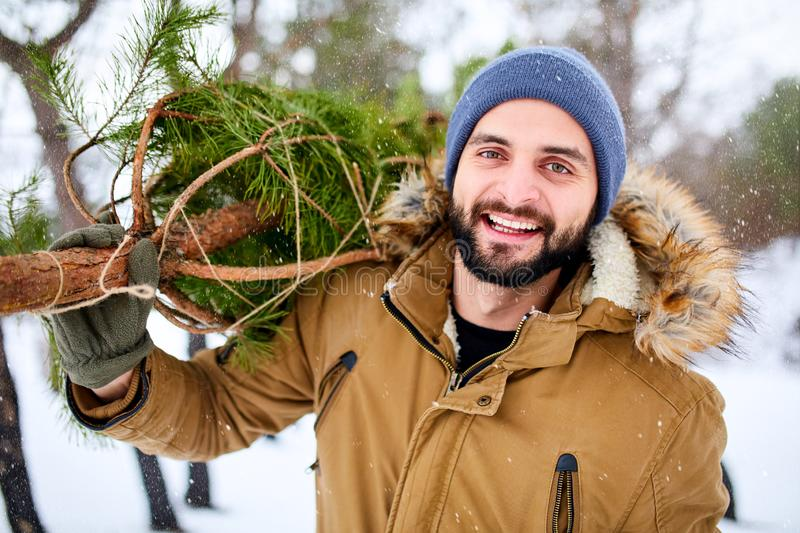 Bearded man carrying freshly cut down christmas tree in forest. Young lumberjack bears fir tree on his shoulder in the stock photography