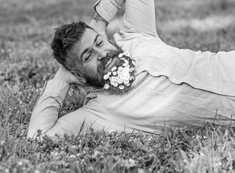 Bearded man with daisy flowers in beard lay on meadow, lean on hand, grass background. Man with beard on happy face. Enjoy nature. Relaxation concept. Hipster royalty free stock photography
