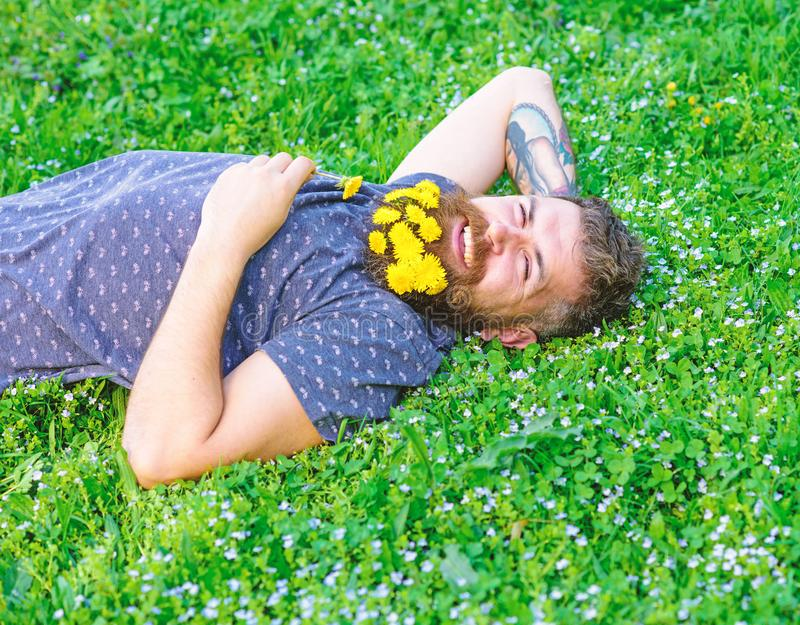 Bearded man with dandelion flowers lay on meadow, grass background. Man with beard on smiling face enjoy nature. Unite. With nature concept. Hipster with stock photo