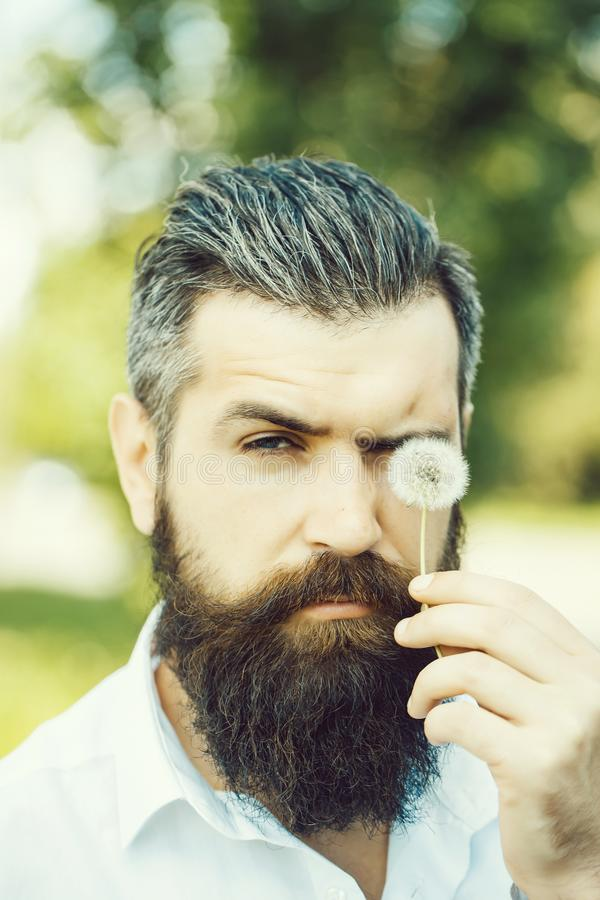 Bearded man with dandelion royalty free stock photography