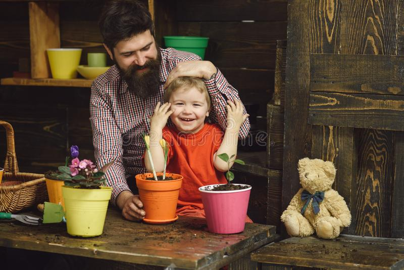 Bearded man and little boy child love nature. Family day. Greenhouse. happy gardeners with spring flowers. Father and royalty free stock photo