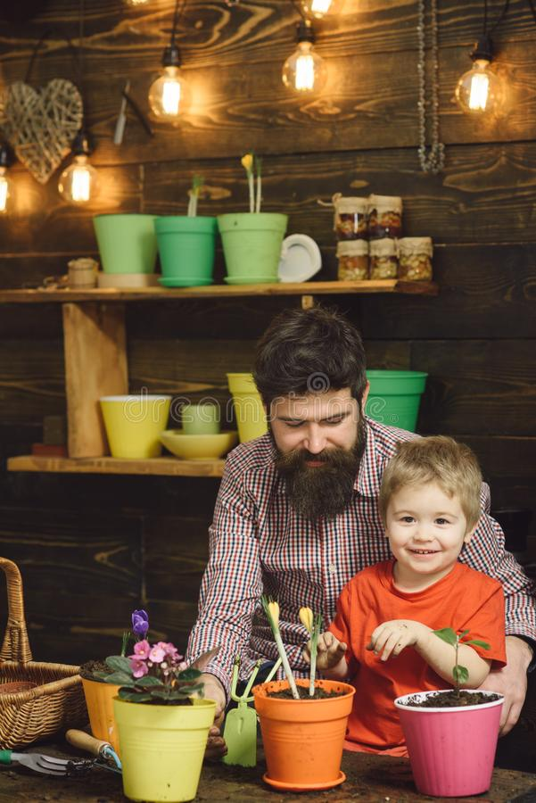 Bearded man and little boy child love nature. Family day. Greenhouse. happy gardeners with spring flowers. Flower care stock images