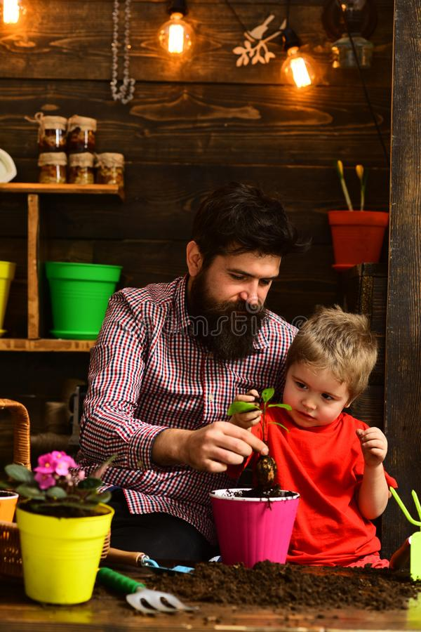 Bearded man and little boy child love nature. happy gardeners with spring flowers. Father and son. Family day royalty free stock images