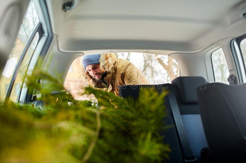 Bearded man loading christmas tree into the trunk of his car, inside view. Hipster puts fir tree into the back of his royalty free stock image