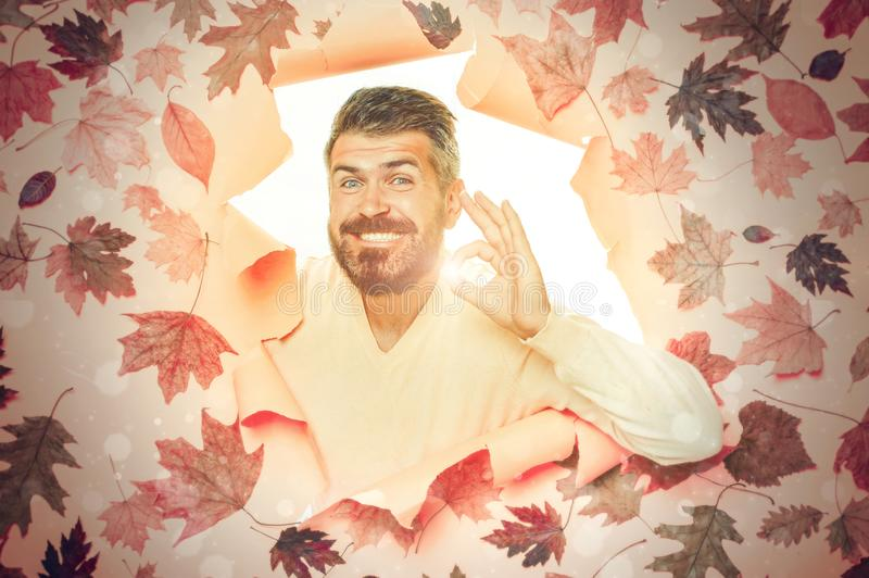 Bearded man playing with leaves and looking at camera. Beautiful young man with beard having fun with Leaf fall. Man are stock photo