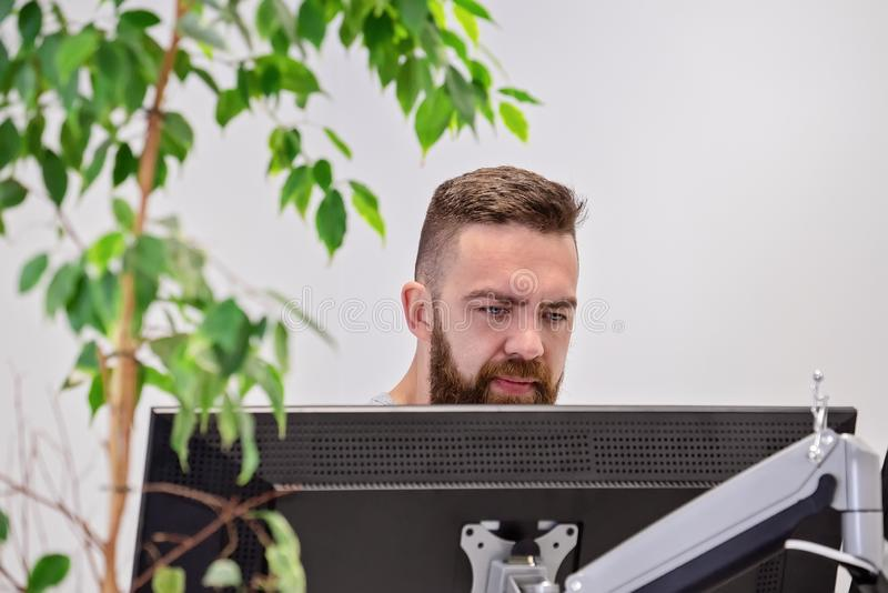 Bearded man works behind computer monitor in modern office with live ficus stock photography