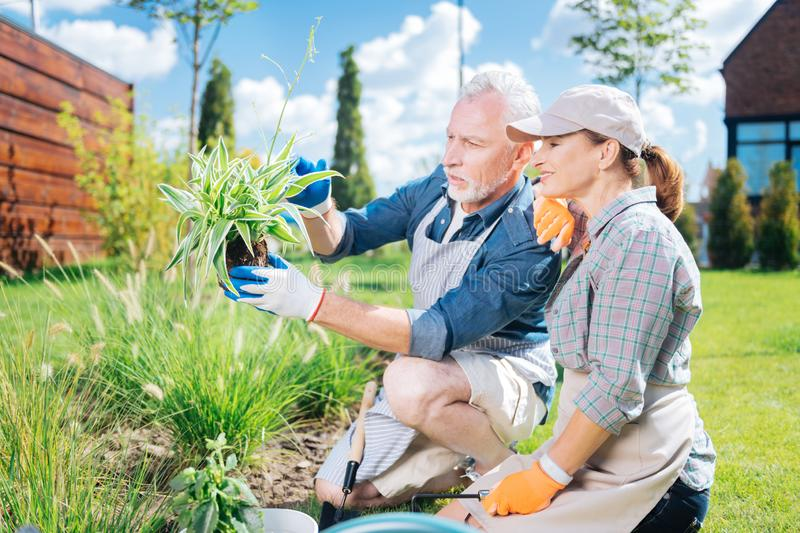Bearded mature man and his smiling appealing wife looking at new green plant royalty free stock images