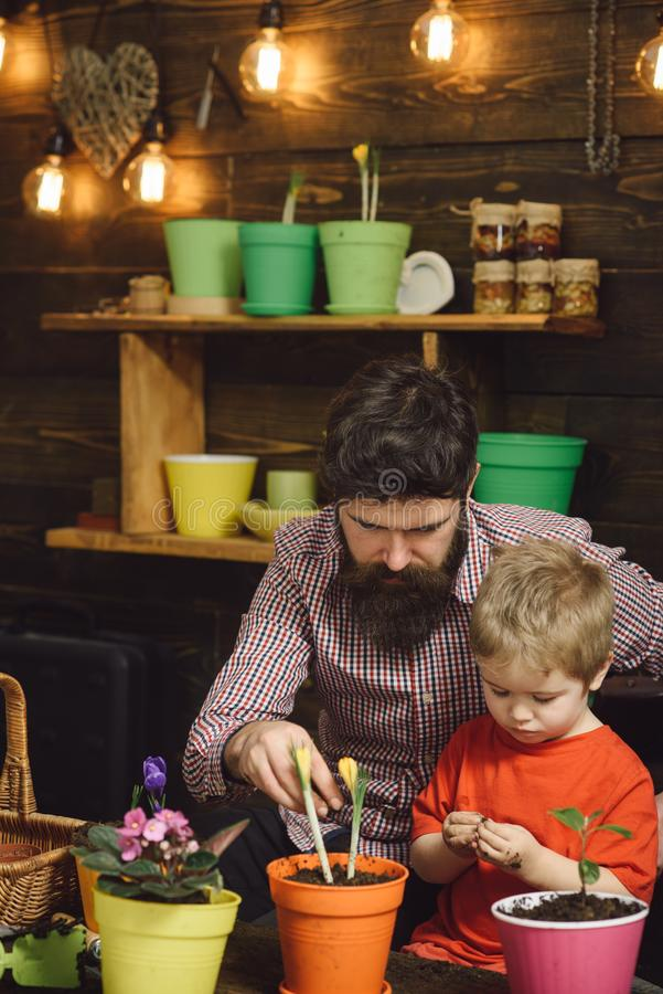 Bearded man and little boy child love nature. Family day. Greenhouse. happy gardeners with spring flower. Flower care stock photography