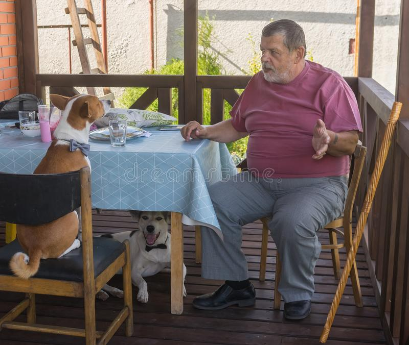 Bearded senior tells horror story to his dogs royalty free stock image