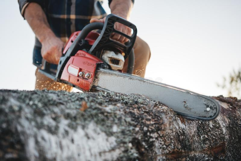 Bearded strong lumberjack wearing plaid shirt sawing tree with chainsaw for work on sawmill royalty free stock photo