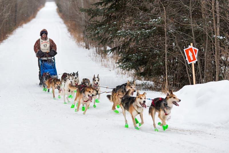 Beargrease 2015 Denis Tremblay maratona sulla traccia fotografie stock libere da diritti