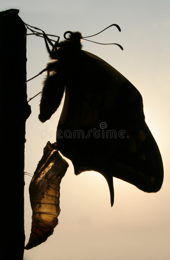 Free Bearing Of Butterfly. Swallowtail Stock Photos - 3670153