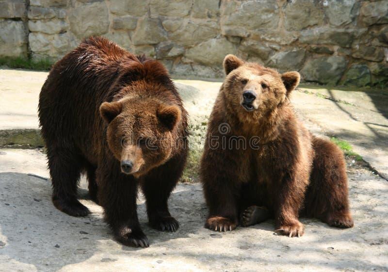 Download Bears stock image. Image of spring, animal, bear, pawed - 10939289