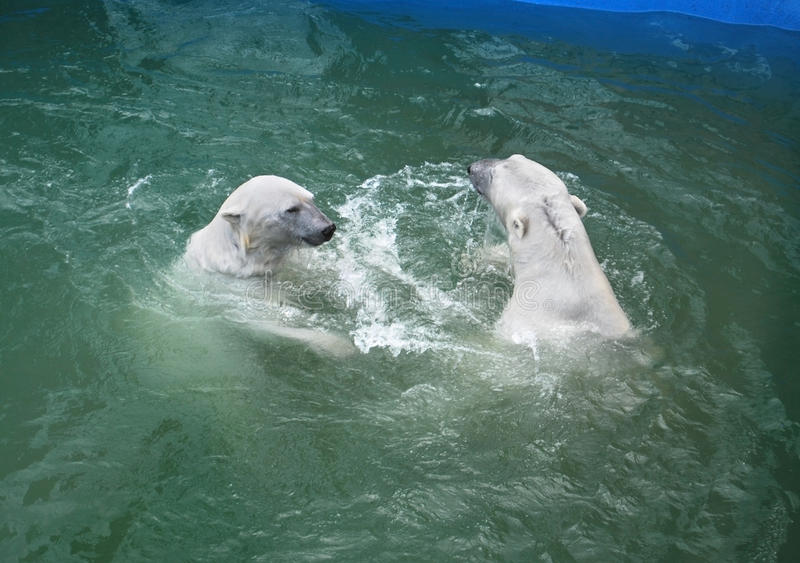 Download Bears stock photo. Image of pool, animal, green, couple - 20075128