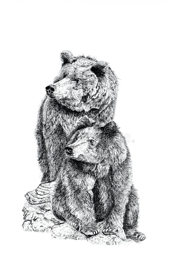 Download Bears stock illustration. Image of beauty, endangered, critters - 507527