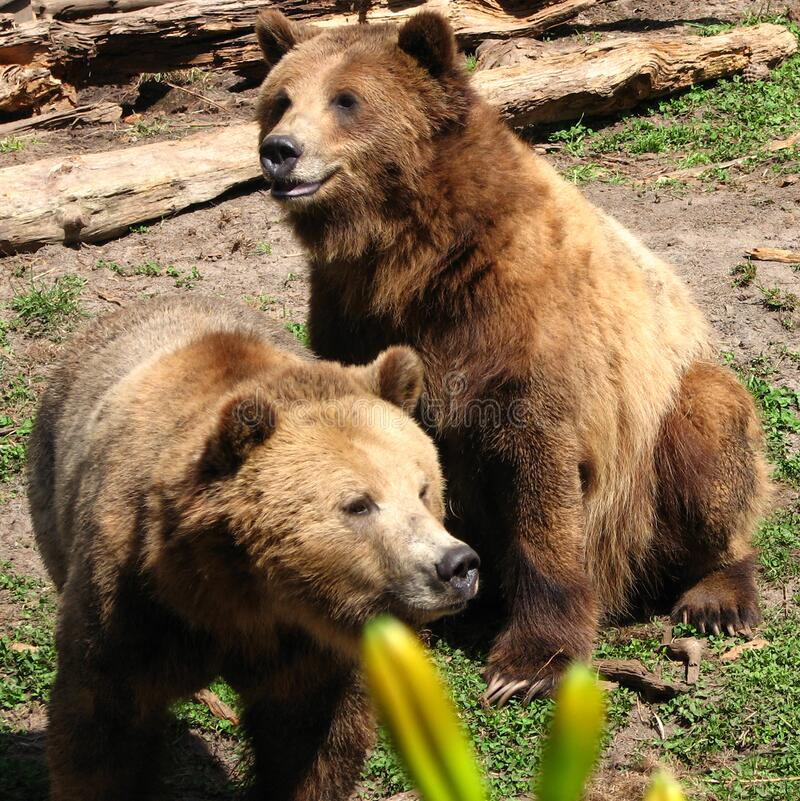 Bears Free Public Domain Cc0 Image