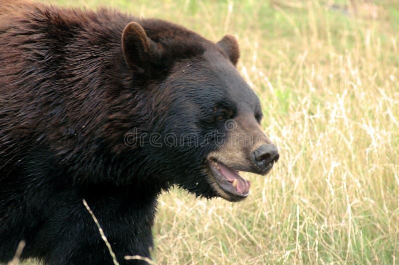 Beary felice di vederlo! 4 fotografie stock