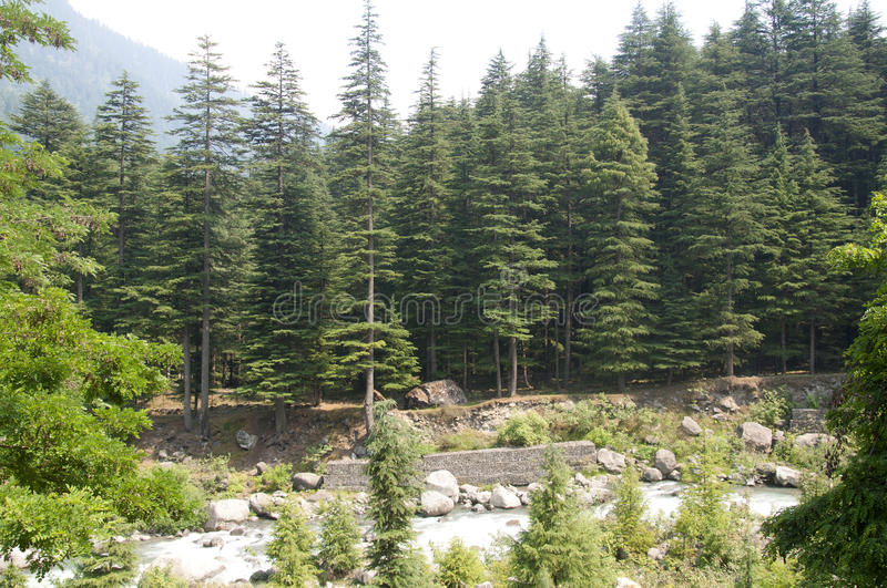 The Beas River Flowing Downstream in Manali, India. Beautiful Trees Along the Path of the Beas River in Manali, India royalty free stock photos