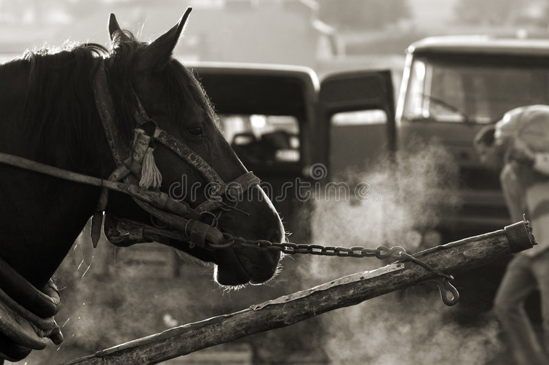 Download Beast of burden stock photo. Image of morning, sepia, poland - 2053980