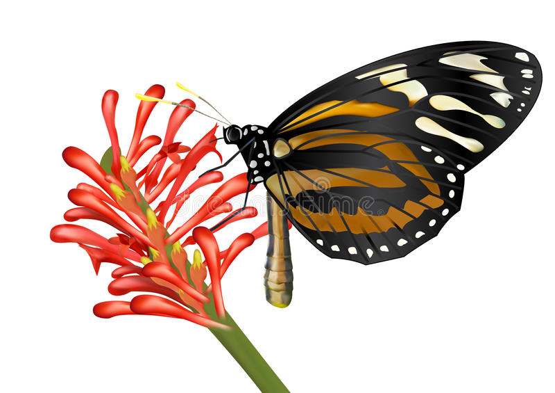 Beatiful Butterfly absorb nectar on flower. Beatiful Butterfly absorb nectar on red flower vector illustration