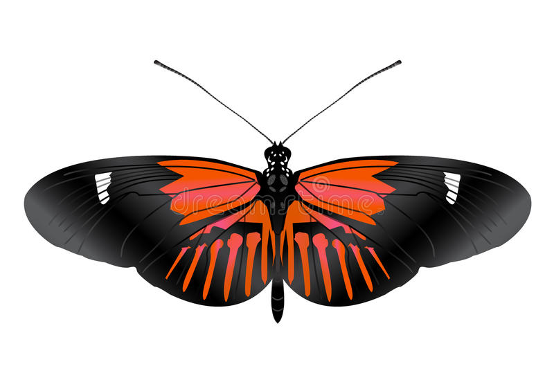 Beatiful Butterfly with open wings. Butterfly with open wings in a top view as a flying migratory insect butterflies that represents summer and the beauty of royalty free illustration