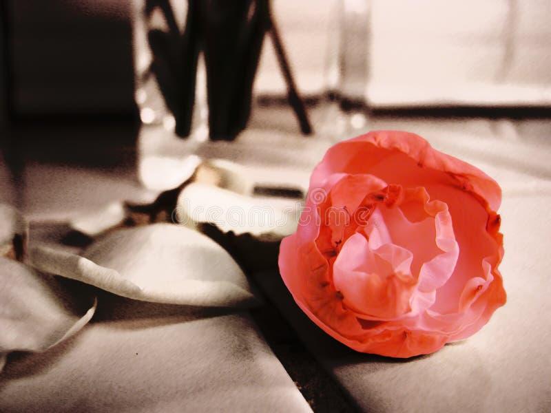 Beatiful Flower Free Stock Image