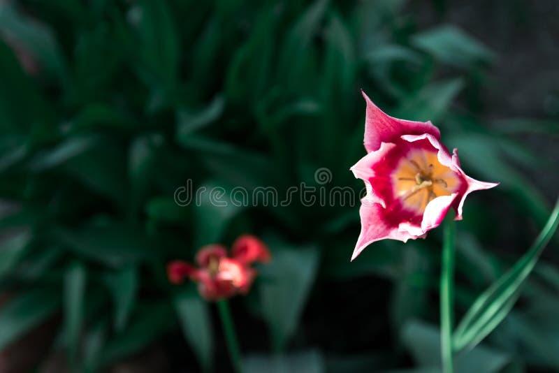 Beatiful flower in the garden stock photo