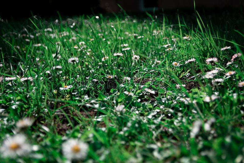 Beatiful flower in the garden stock photography