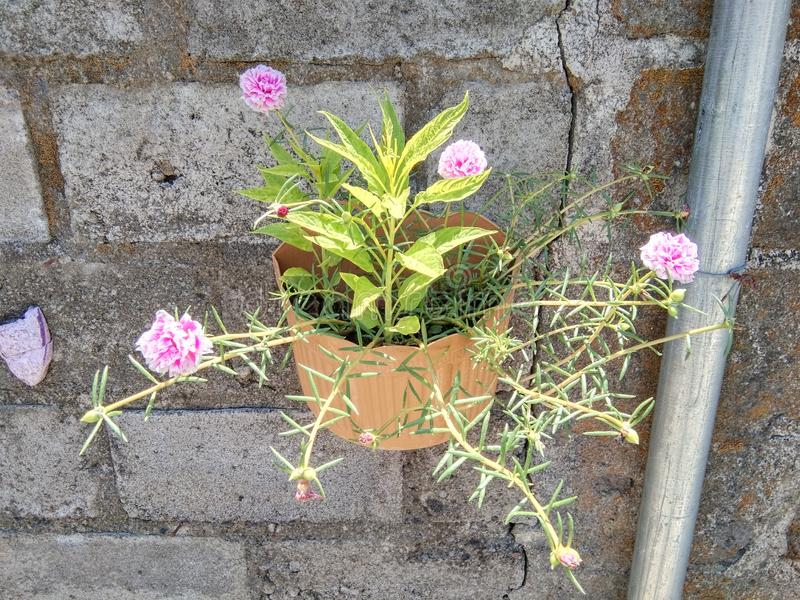 Beatiful flower in the garden stock image