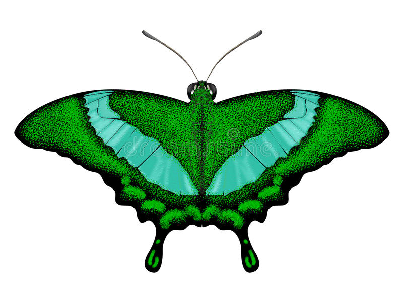 Beatiful Green Butterfly - Papilio palinurus. Beatiful Green-banded Swallowtail - Papilio palinurus stock illustration