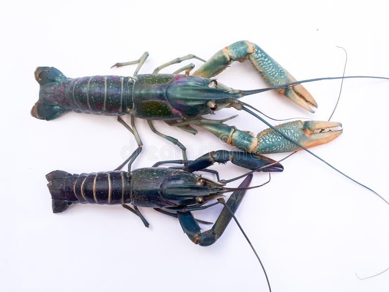 Beatiful shrimp stock photography