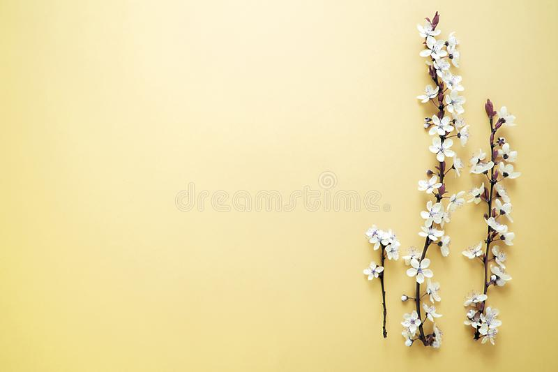 Beatiful spring`s blooming tree with white flowers on yellow background. Spring`s background royalty free stock photography