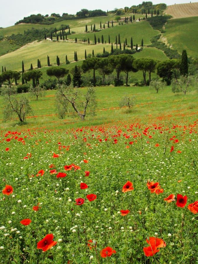 Beatiful tuscan scenery in spring royalty free stock image
