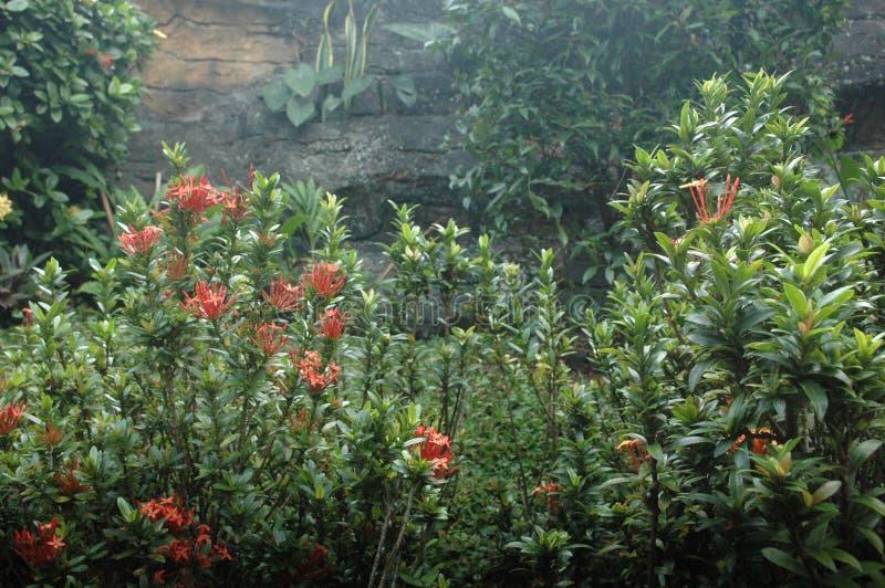 Beatifull цветет и природа стоковая фотография rf