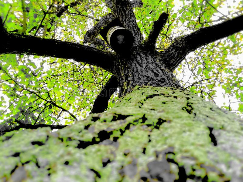 A beatifull tree! Save the nature royalty free stock image