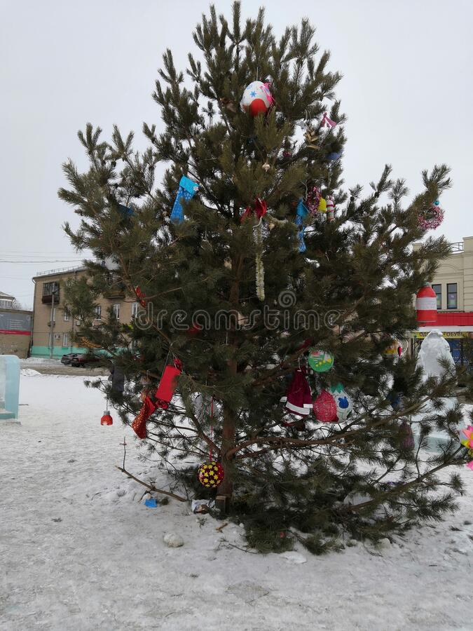 Beatifull tree in the snow. In the city in the winter royalty free stock photos