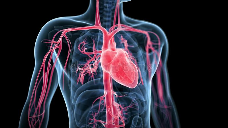 Beating heart stock video. Illustration of cardiovascular - 68299463