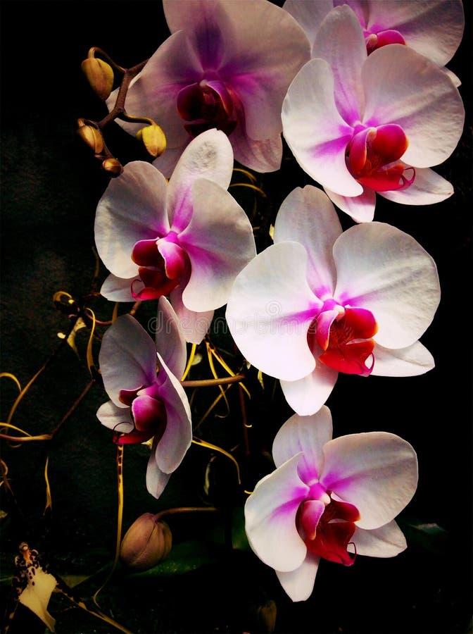 Beatutiful Flowers stock photo