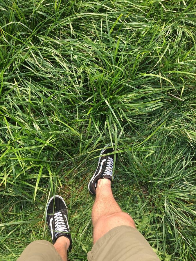 Beatutiful grönt gräs royaltyfri foto