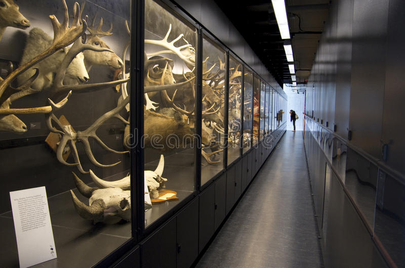Beaty biodiversity museum. Has natural history exhibits with over 2 million specimens and Canada's largest blue whale skeleton. Vancouver, Canada royalty free stock photos