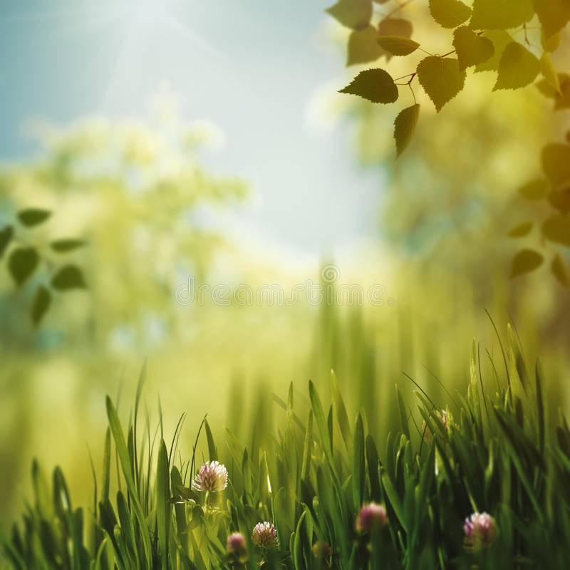 Beaty colors of nature. Afternoon in the summer forest royalty free stock image