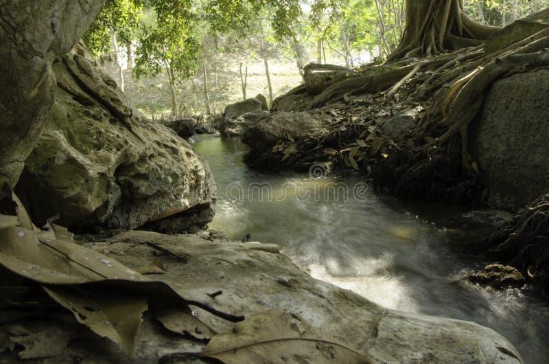 Beau bassin naturel de cascades dans la forêt images stock