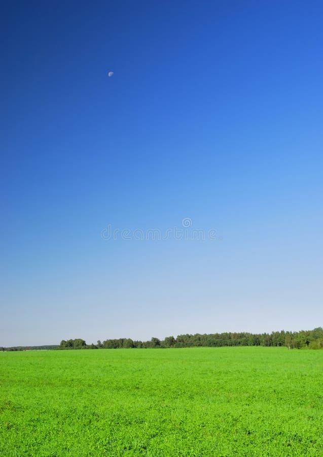 Beau bleu d'herbe et d'espace libre photo stock