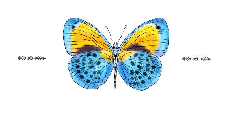 Beau bleu réaliste tiré par la main et papillon jaune d'isolement sur un fond blanc Collection d'insecte illustration de vecteur
