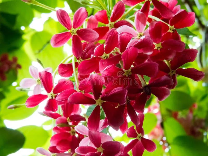 Beau bokeh des fleurs avec le fond de tache floue image libre de droits